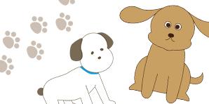 dog_catch